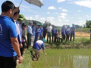 Tuổi trẻ Đại học Nông Lâm Tp HCM chung tay xây dựng Nông thôn mới